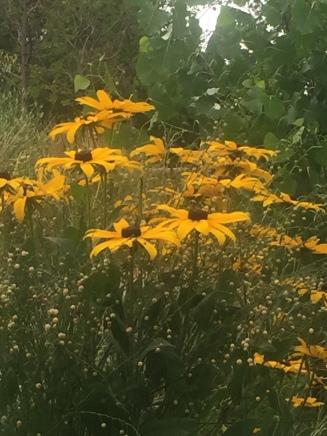 Flowers in Boulder